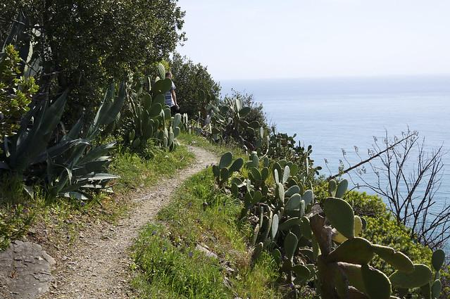 7. Corniglia to Vernazza