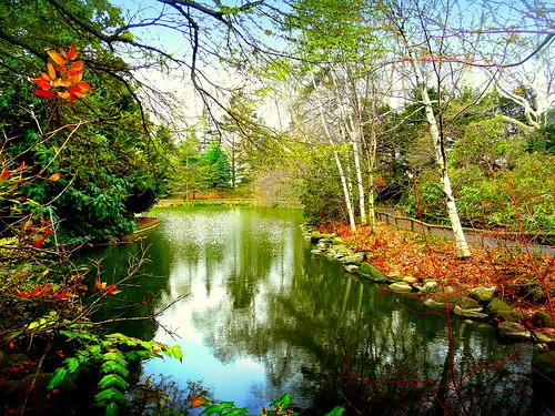 b newyork reflection brooklyn spring image brooklynbotanicgarden dmitriyfomenko spring62015