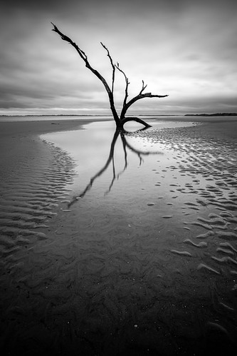follybeach follybeachcountypark lonely tree deadtree reflection charleston southcarolina lowcountry beach ocean discoversc explorecharleston