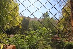 Fence سياج