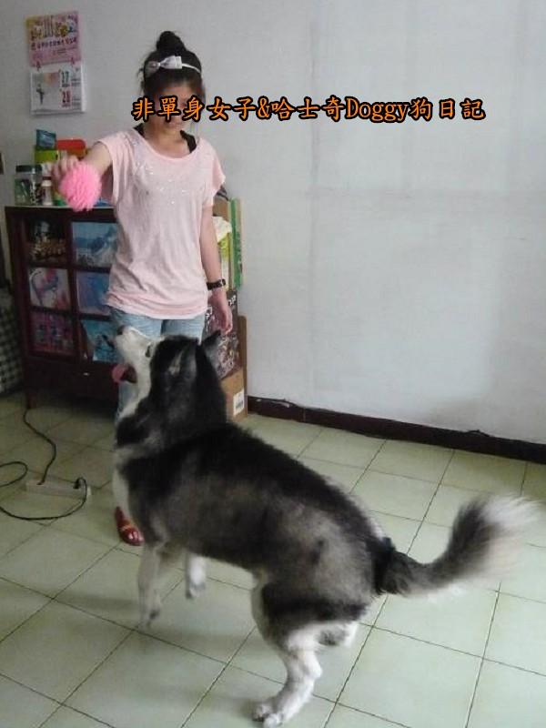 Doggy歡迎光臨12