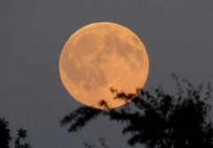 Moon touching tree