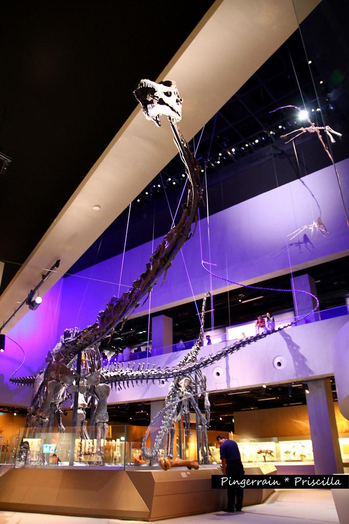 Prince, one of the three sauropod dinosaur