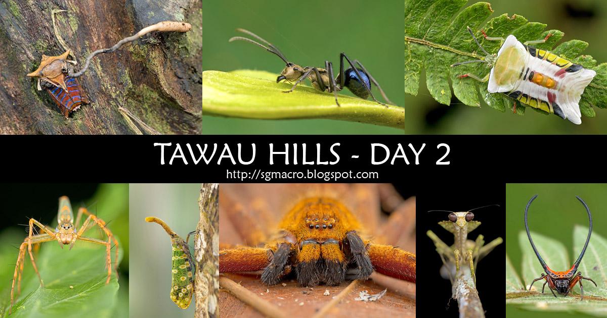 Tawau Hills - Day 2