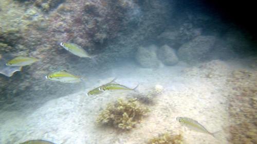 Koh Samui Snorkel- Coral Cove