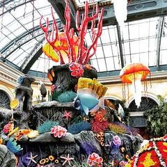 Bellagio's new Seasonal display! It's Tropical 🐬 #bellagio #ilovelasvegas #lasvegas #tropical