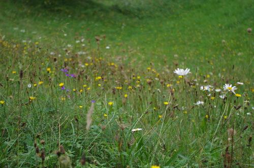 Wildflowers - Agritourism