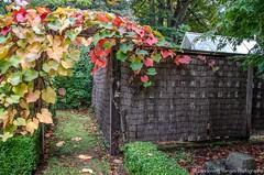 Visiting Mawarra: An Edna Walling Garden