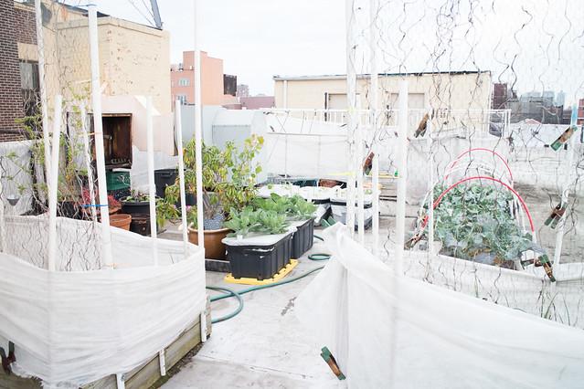 Garden May 15 2015_43