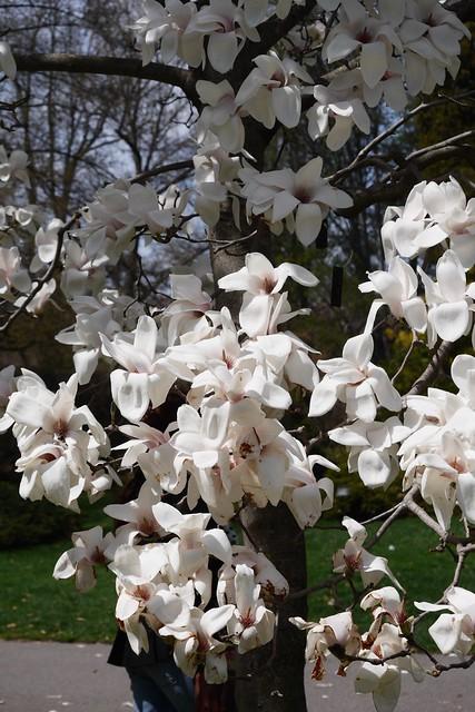日, 2015-04-19 14:02 - Brooklyn Botanic Garden