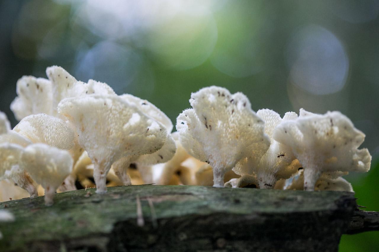 Los hongos de todo tipo ayudan a acelerar la descomposición de los desechos del bosque y continúan con el ciclo de vida. (Tetsu Espósito)