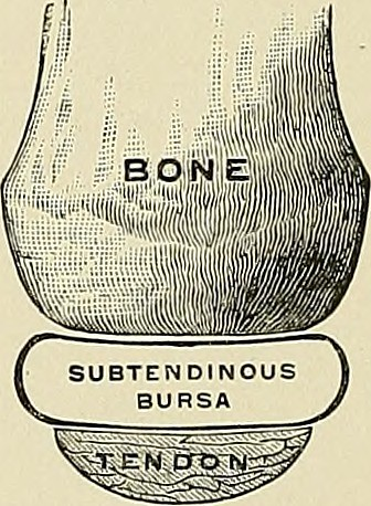 Image result for what is the bursa hip