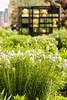 Web High Line 10