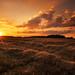 golden hour by Lena Held