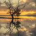 Tree in Water by larsintown
