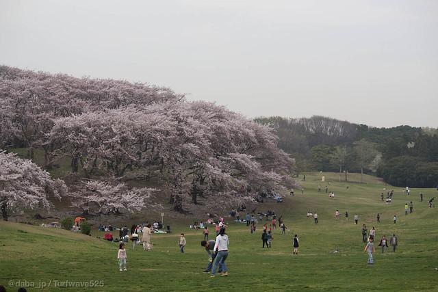 20150406 根岸森林公園 / Negishi Forest Park