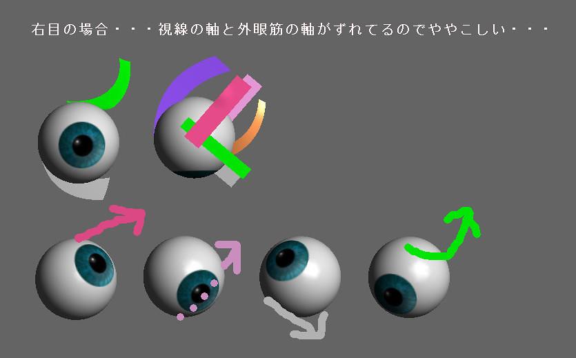 眼球モデルで外眼筋の動きを確認する