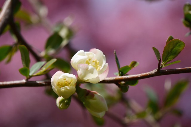 日, 2015-04-19 13:57 - Brooklyn Botanic Garden