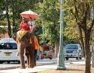 Image of  Elephant riding. elephant umbrella uniform arms tourist folded relaxed ayutthaya mahout