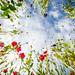 flowers (4 of 12)C by Torrit | www.sevencolours.biz