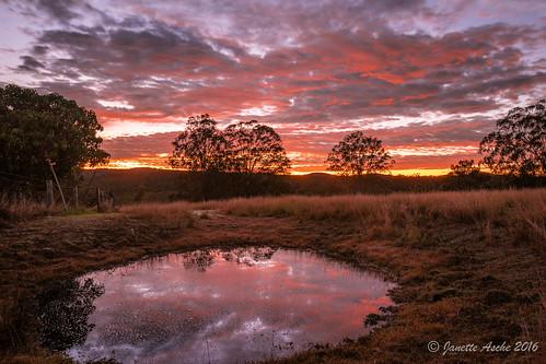 2016 australia jacksplace mtmaroon qld queensland sonya7r beautiful clouds scenicrim seqld sunrise winter pond dam farm farmland rural trees reflection grass australiareflectionsawardwinner