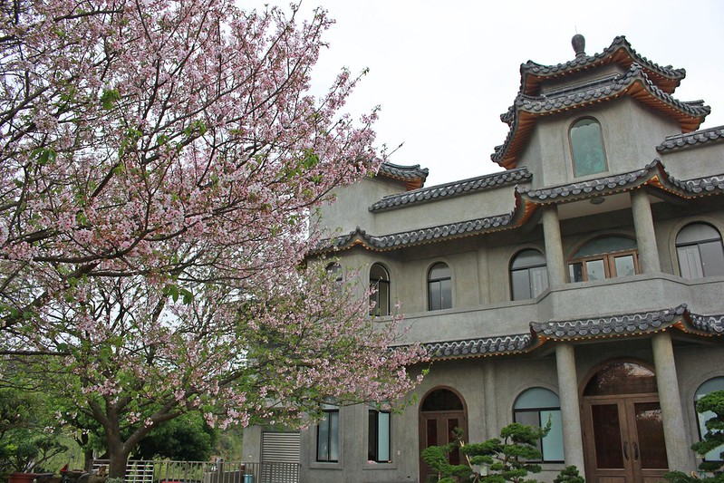 17度C在地景點春季推薦-東方室-櫻花 (10)