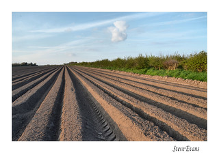 lines and furrows