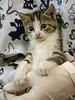 Office Kittens_10