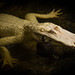 Reptile buddies by ronniegoyette