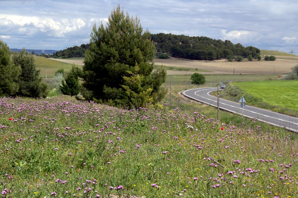 combinados de flores silvestres y otros paisajes de Valdemoro-071