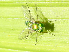fly cairns