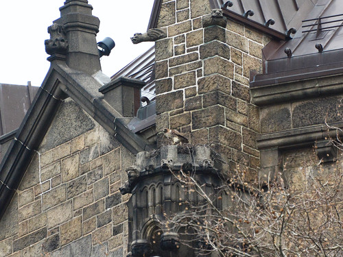 Cathedral Hawk 1 - 8531