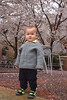 Blossoms and standing toddler