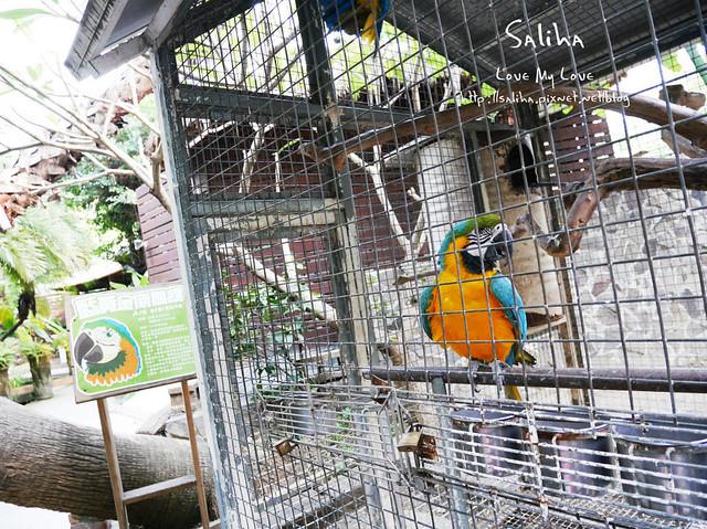 高雄ㄧ日遊景點餐廳動物園淨園 (10)