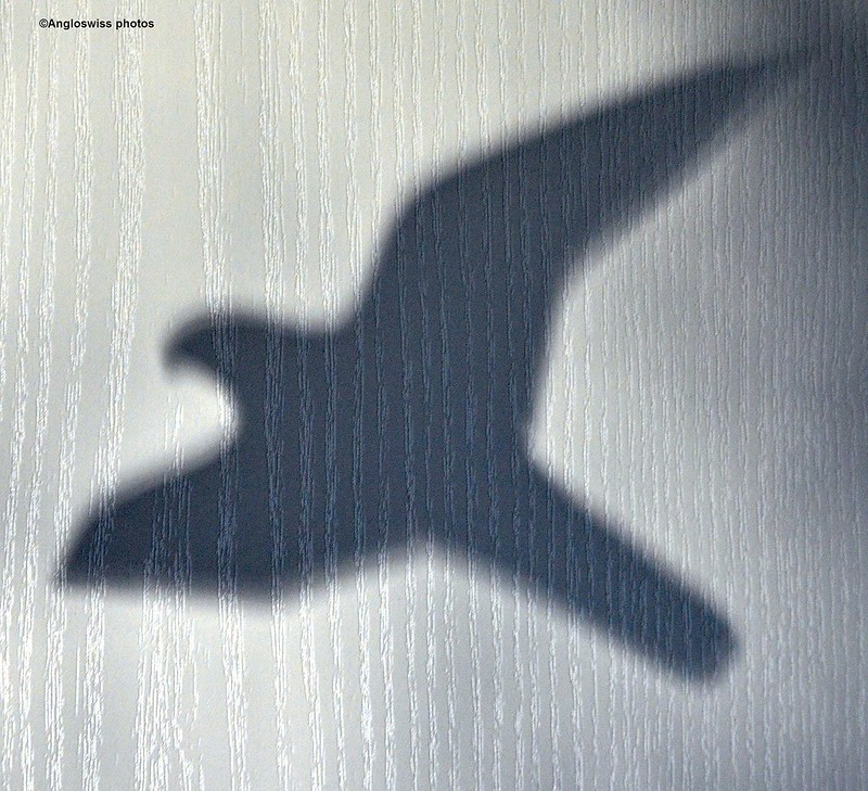 Shadow of the bird