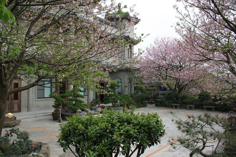 17度C在地景點春季推薦-東方室-櫻花 (21)