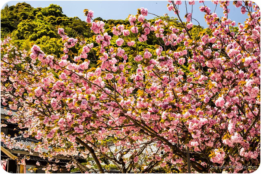 2015-04-17-20150417(Canon EOS 6D)-00054