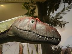 fauna, close-up, dinosaur,