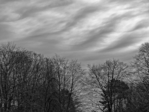 shadow brussels sky blackandwhite cloud tree blanco europe belgium belgique noiretblanc negro bruxelles wave ombre panasonic ciel dxo nuage vague brussel zwart wit arbre hdr schaarbeek schaerbeek 白黒 belgïe schwarzweis mustavalkoinen inbiancoenero svartochvitt أبيضوأسود bestofbw fz200 μαύροκαιάσπρο pascalfranche pfranche שוואַרץאוןווייַס 黑白чернобелоеизображение