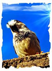 bird building