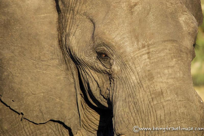 best wildlife viewing in botswana