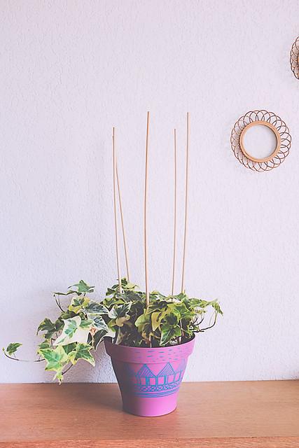 diy plante et jardin Lierre