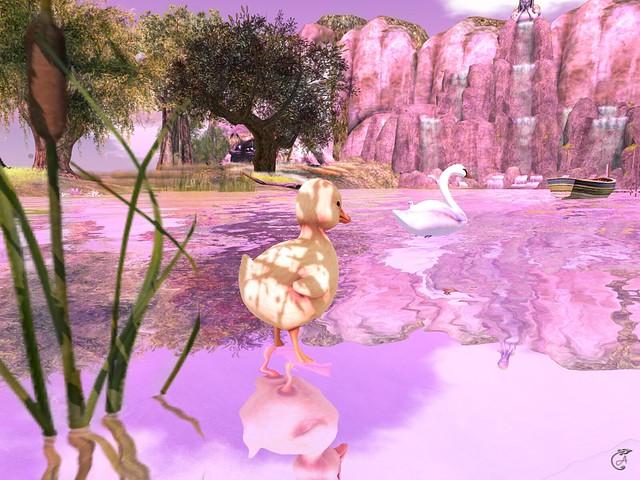 Ducklings journey beginning