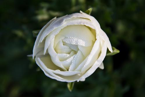 morning white flower eye birds dew