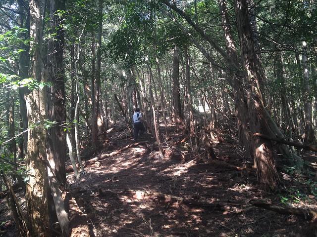 茶臼山 登山道