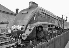 All North Yorkshire Moors Railway Photographs.