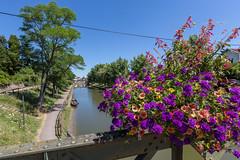 Digoin Blumen
