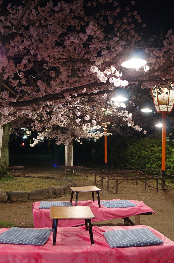 京阪神賞櫻去