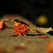 DSC_0101 by hiba.benlahrech