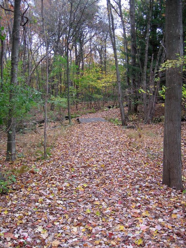 Leafy trail with bridge